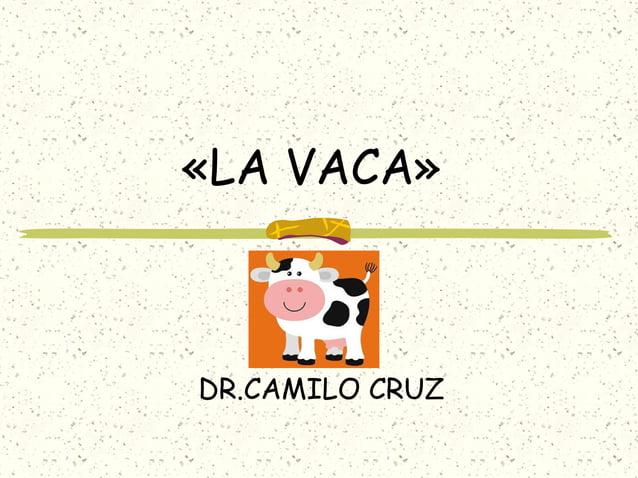 «LA VACA» DR.CAMILO CRUZ