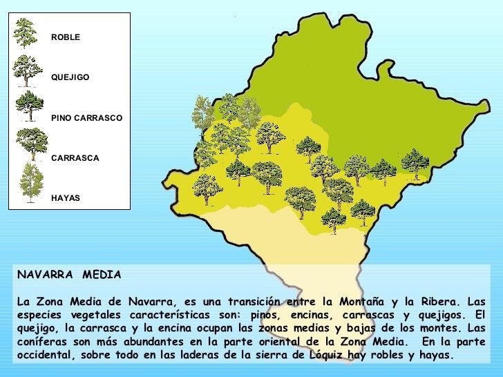 ROBLE QUEJIGO PINO CARRASCO CARRASCA HAYAS NAVARRA  MEDIA La Zona Media de Navarra, es una transición entre la Montaña y l...