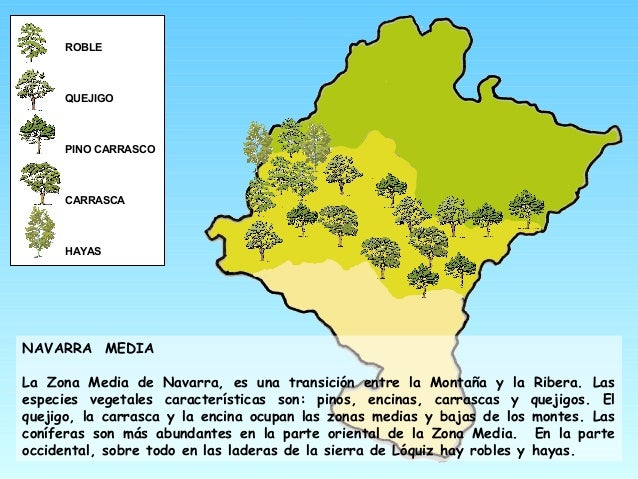 ROBLE QUEJIGO PINO CARRASCO CARRASCA HAYAS NAVARRA MEDIA La Zona Media de Navarra, es una transición entre la Montaña y la...
