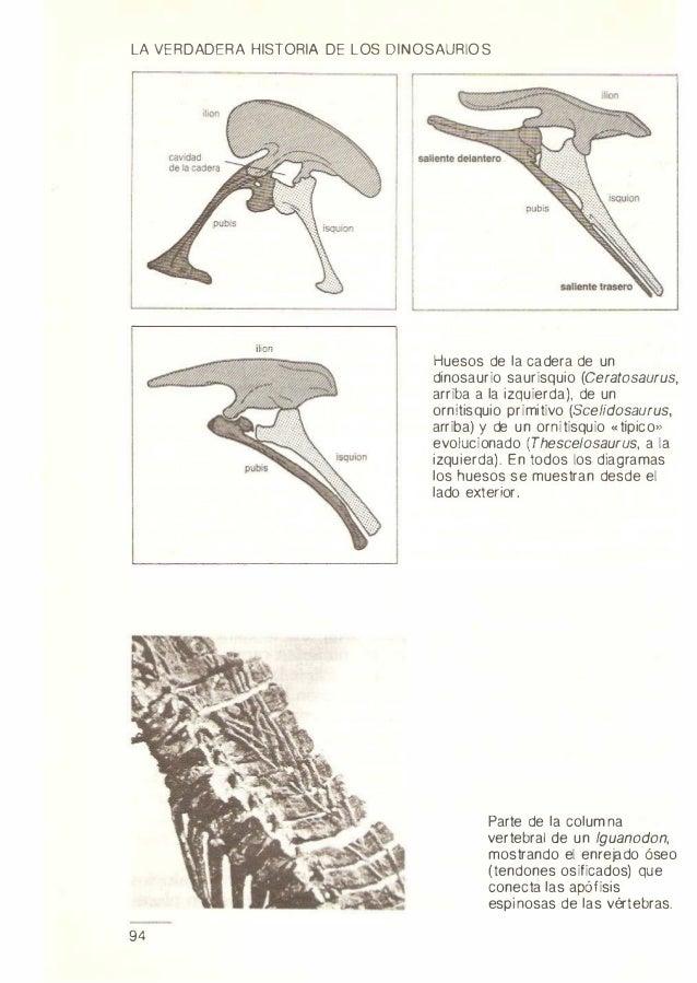 Hermosa Diagrama De Hueso De La Cadera Regalo - Anatomía de Las ...