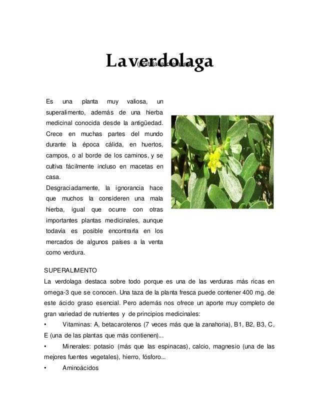(portulaca oleracea)Laverdolaga SUPERALIMENTO La verdolaga destaca sobre todo porque es una de las verduras más ricas en o...