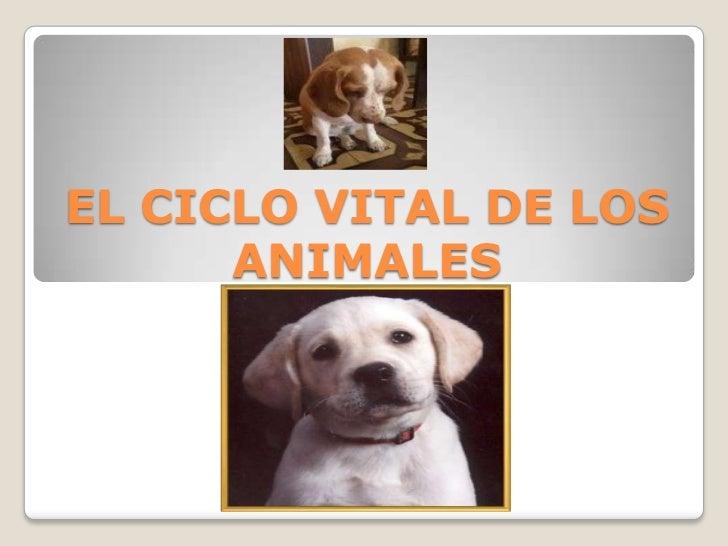 EL CICLO VITAL DE LOS      ANIMALES