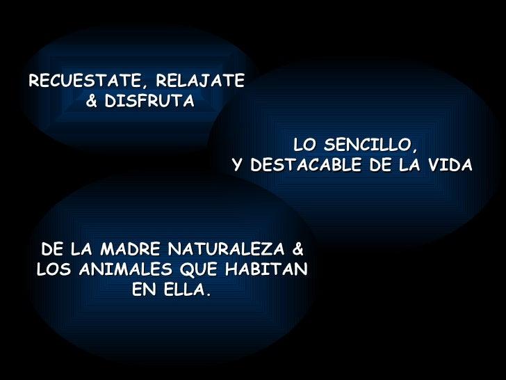 RECUESTATE, RELAJATE  & DISFRUTA LO SENCILLO, Y DESTACABLE DE LA VIDA  DE LA MADRE NATURALEZA & LOS ANIMALES QUE HABITAN E...