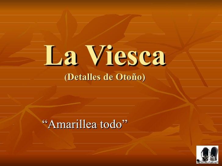 """La Viesca ( Detalles de Otoño) """" Amarillea todo"""""""