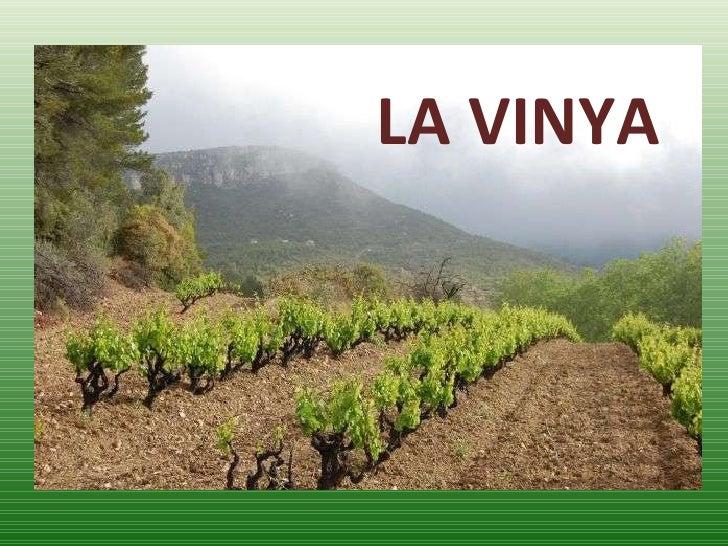 Resultat d'imatges de la vinya