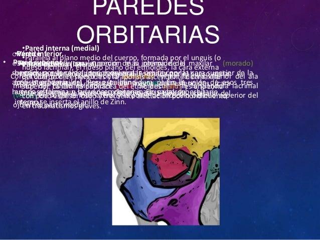 La vista for Paredes orbitarias