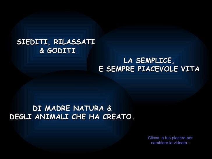 SIEDITI, RILASSATI  & GODITI LA SEMPLICE, E SEMPRE PIACEVOLE VITA DI MADRE NATURA & DEGLI ANIMALI CHE HA CREATO. Clicca  a...