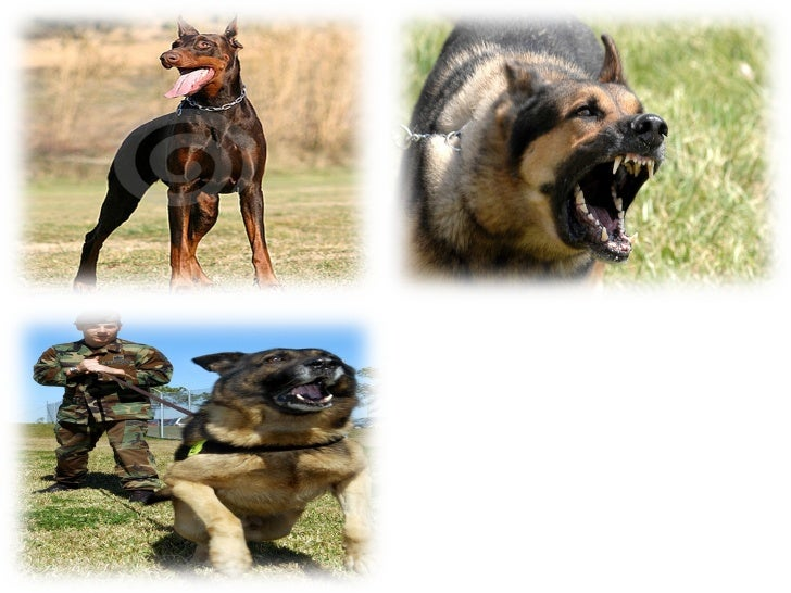 ANIMAL BARRIERS  Animals are used in partially providing a guarding system. Dogs are usually trained and utilized to serve...