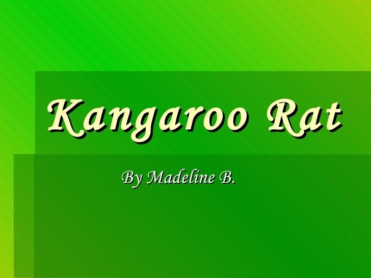 Kangaroo Rat By Madeline B.