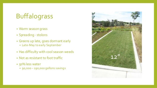 Lawn Alternatives on crosican mint grass alternatives, wall alternatives, bangs alternatives, patio alternatives, low maintenance grass alternatives, landscaping alternatives, rice alternatives,
