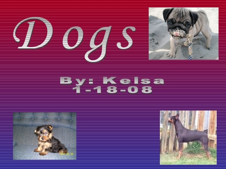 Dogs By: Kelsa 1-18-08