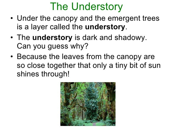 5. The Understory u2022 Under the canopy ...  sc 1 st  SlideShare & Layers Of Rainforest