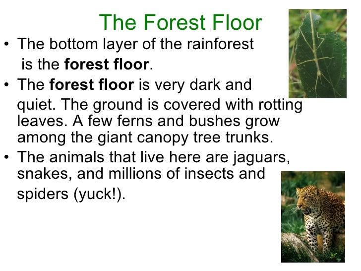 Layers Of Rainforest