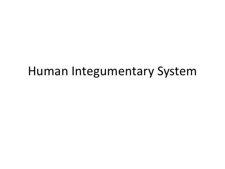 Human Integumentary System