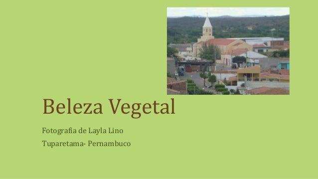 Beleza Vegetal Fotografia de Layla Lino Tuparetama- Pernambuco