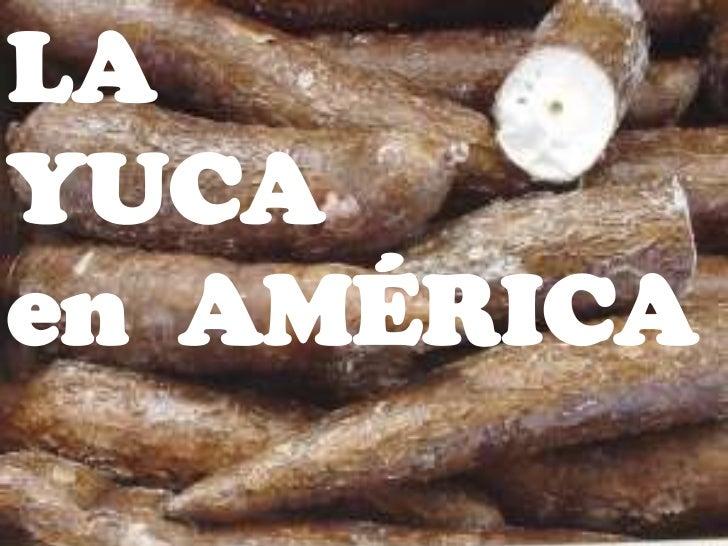 LALA YUCA EN AMÉRICAYUCAen AMÉRICA                             •ELISA REA                   •STEFANY RODRÍGUEZ            ...