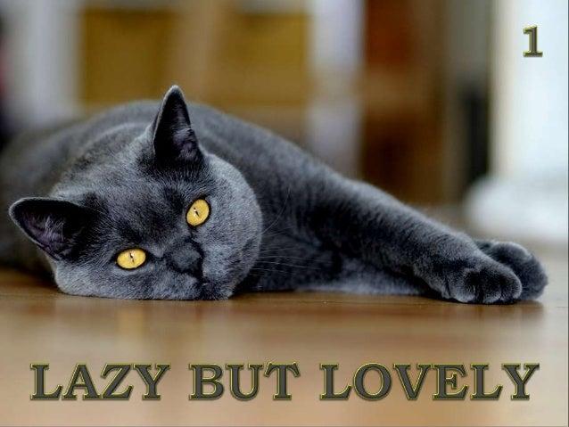 LAZY BUT LOVELY 1