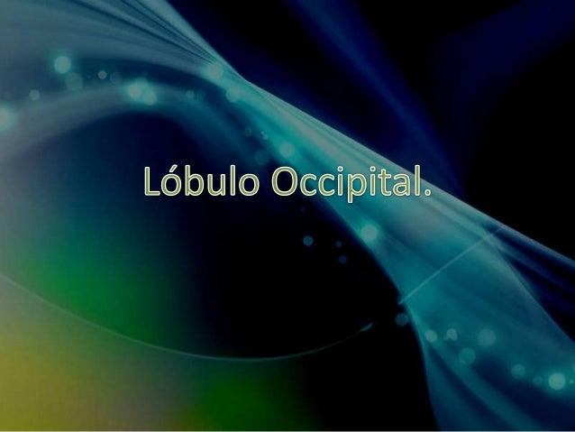Ubicación y Función. • El lóbulo occipital está ubicado en la zona posterior-inferior del cerebro, por detrás de los lóbul...