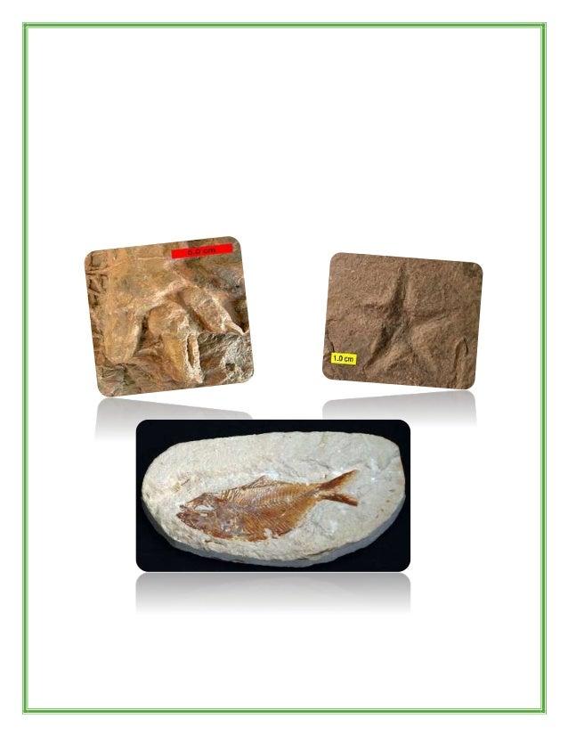 Estructuras originales Son fósiles que han sido encontrados o descubiertos con su estructura original sin hab er sufr ido ...