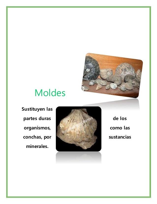 Disciplinas de Estudio de Paleontología Paleozoología