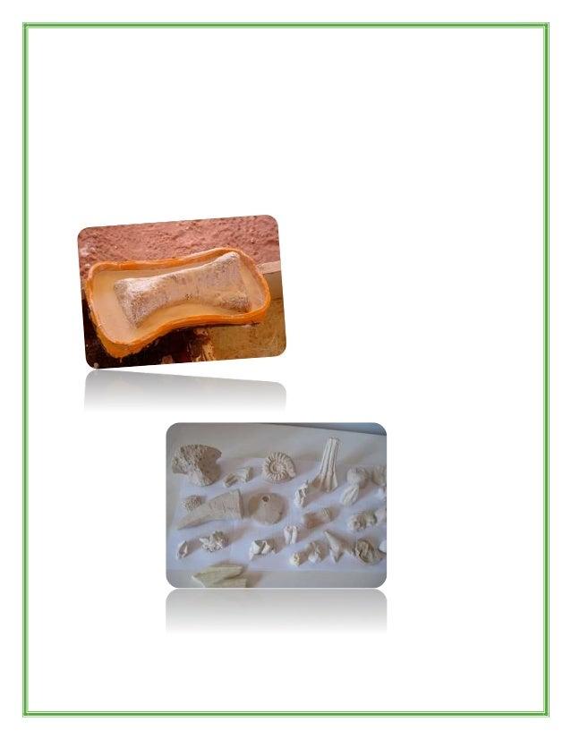 P al e obotánica Es una disciplina compartida por la Botánica y la Paleontología que estudia los restos de vegetales que v...