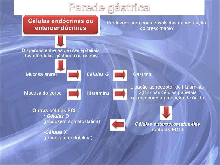 Dispersas entre as células epiteliais das glândulas gástricas ou antrais Mucosa antral Células enterocromafim-like  (célul...