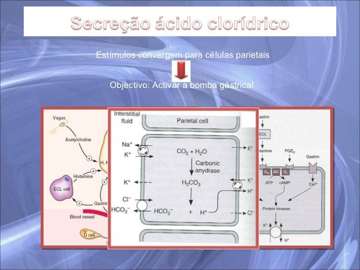 Estímulos convergem para células parietais Objectivo: Activar a bomba gástrica!