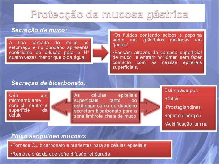 Secreção de muco:   Secreção de bicarbonato: Fluxo sanguíneo mucoso: <ul><li>Os fluidos contendo ácidos e pepsina saem das...