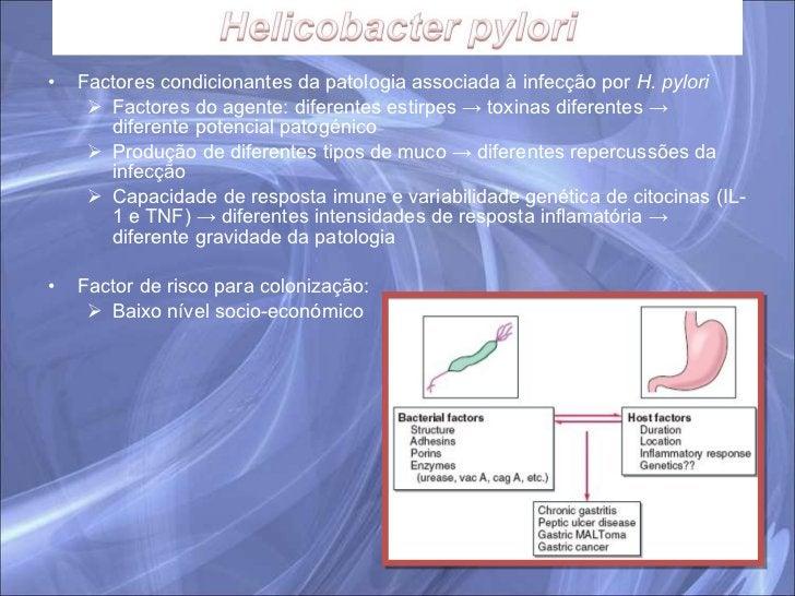 <ul><li>Factores condicionantes da patologia associada à infecção por  H. pylori </li></ul><ul><ul><li>Factores do agente:...