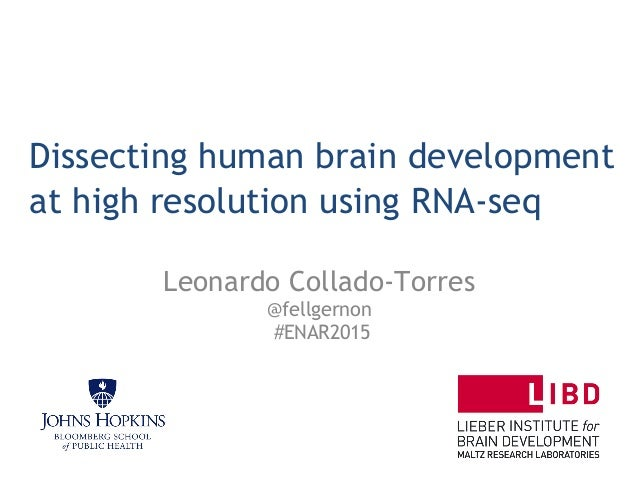 Dissecting human brain development at high resolution using RNA-seq Leonardo Collado-Torres @fellgernon #ENAR2015