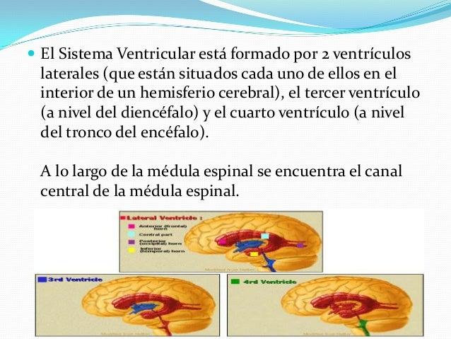 LIQUIDO CEFALORRAQUIDEO Y SISTEMA VENTRICULAR Slide 2
