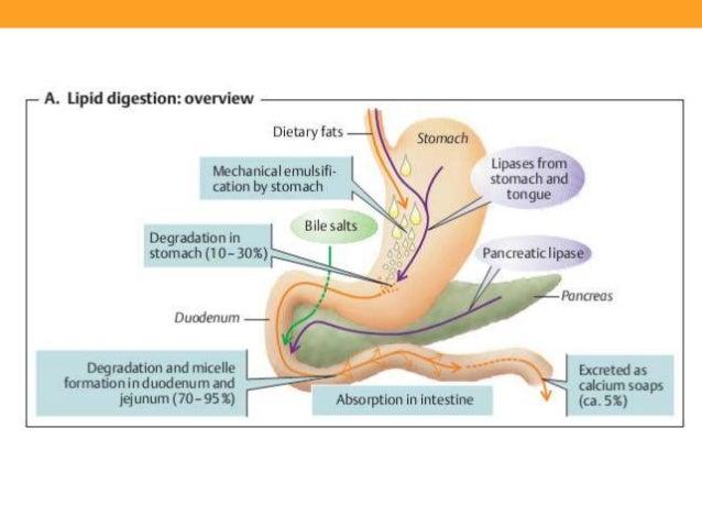 Similar a la dieta del metabolismo acelerado pdf
