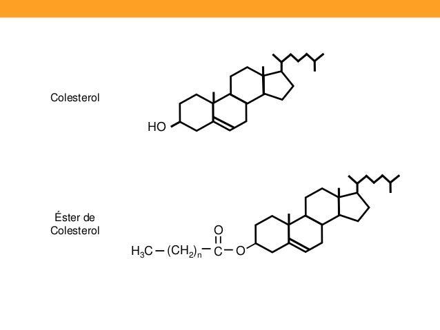 Biologia 17 i etapa del metabolismo de los lipidos (1)