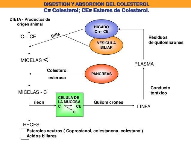 Partes del metabolismo celular