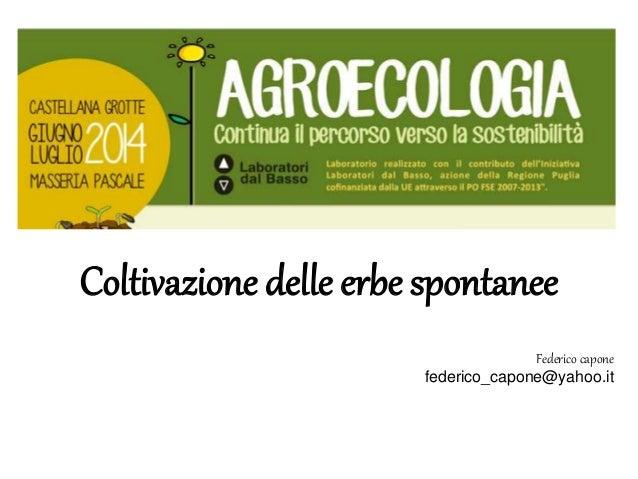 Coltivazione delle erbe spontanee  Federico capone  federico_capone@yahoo.it