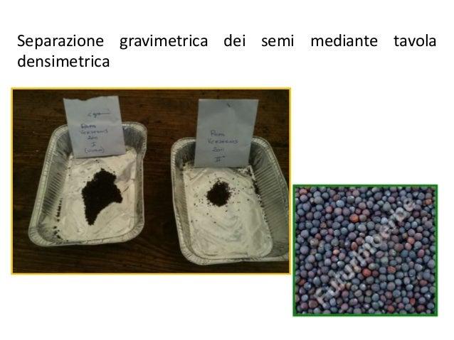 Semi piante inverno duro duro gelo giardino sementi frutta nera bocca Mirtillo