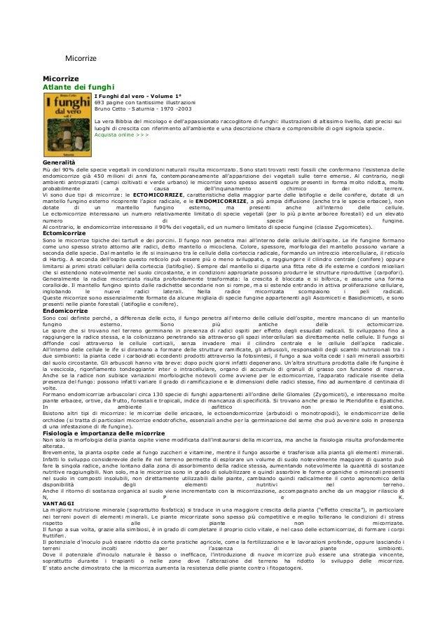 Micorrize Micorrize Atlante dei funghi I Funghi dal vero - Volume 1° 693 pagine con tantissime illustrazioni Bruno Cetto -...