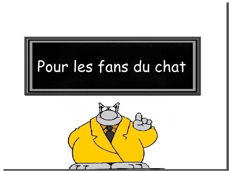 Pour les fans du chat