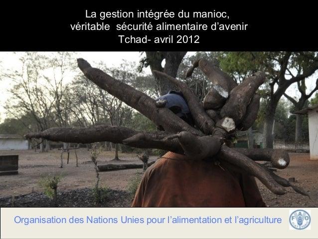 La gestion intégrée du manioc,              véritable sécurité alimentaire d'avenir                        Tchad- avril 20...