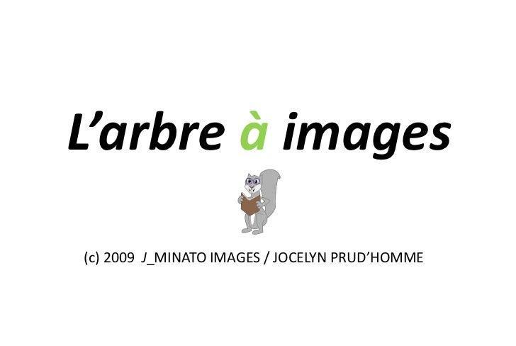 L'arbre à images(c) 2009 J_MINATO IMAGES / JOCELYN PRUD'HOMME