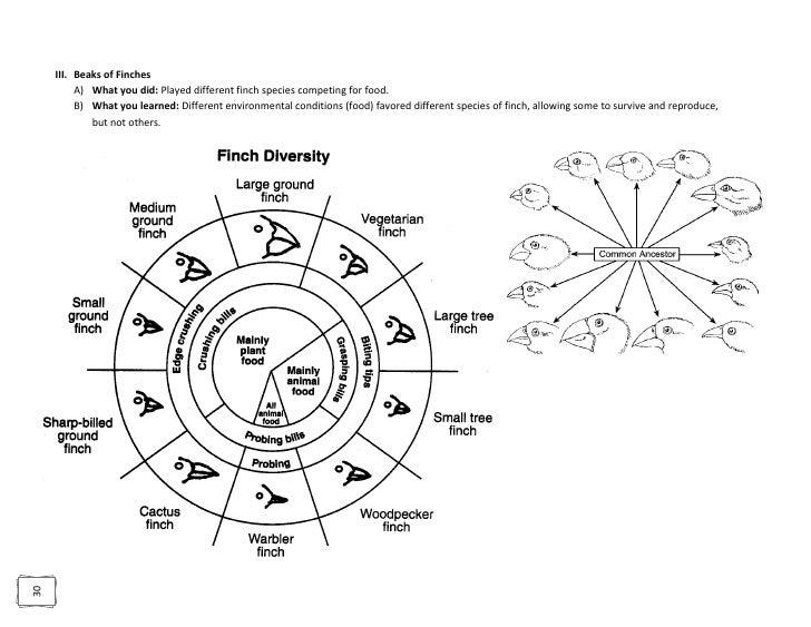 Biology dunleavy regents review 50 ccuart Choice Image