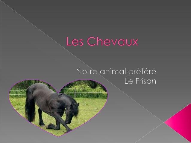 L'un des plus vieux chevaux d'Europe , Le Frison , est un ancêtre de la ligne primitive « cheval des forêts « et qui est i...