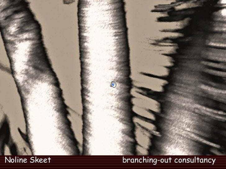Noline Skeet  branching-out consultancy