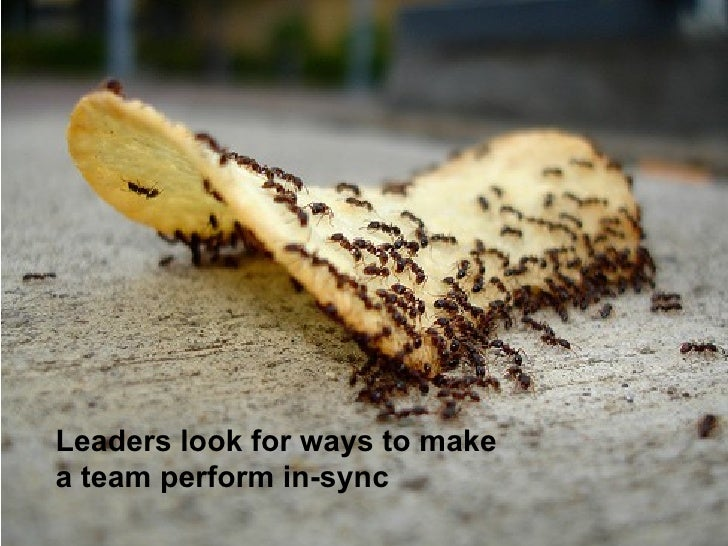 Leaders look for ways to make a team perform in-sync