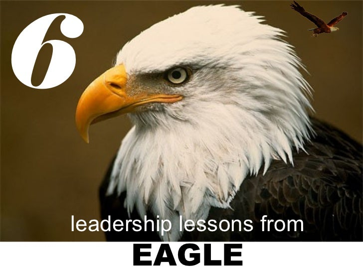 6leadership lessons from     EAGLE