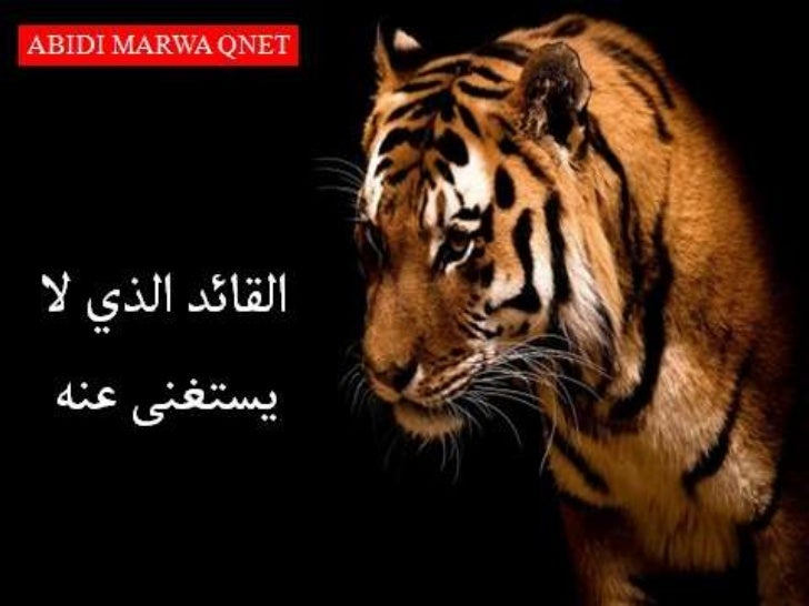A.MARWA QNET: Leadership story
