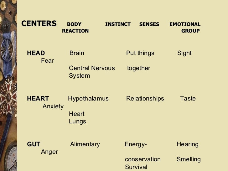 HEAD   Brain  Put things  Sight  Fear Central Nervous  together  System HEART   Hypothalamus  Relationships  Taste  Anxiet...