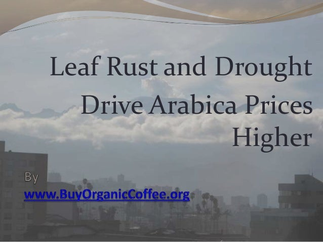 Leaf Rust and Drought Drive Arabica Prices Higher