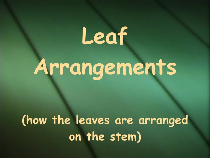 Leaf Arrangements (how the leaves are arranged on the stem)