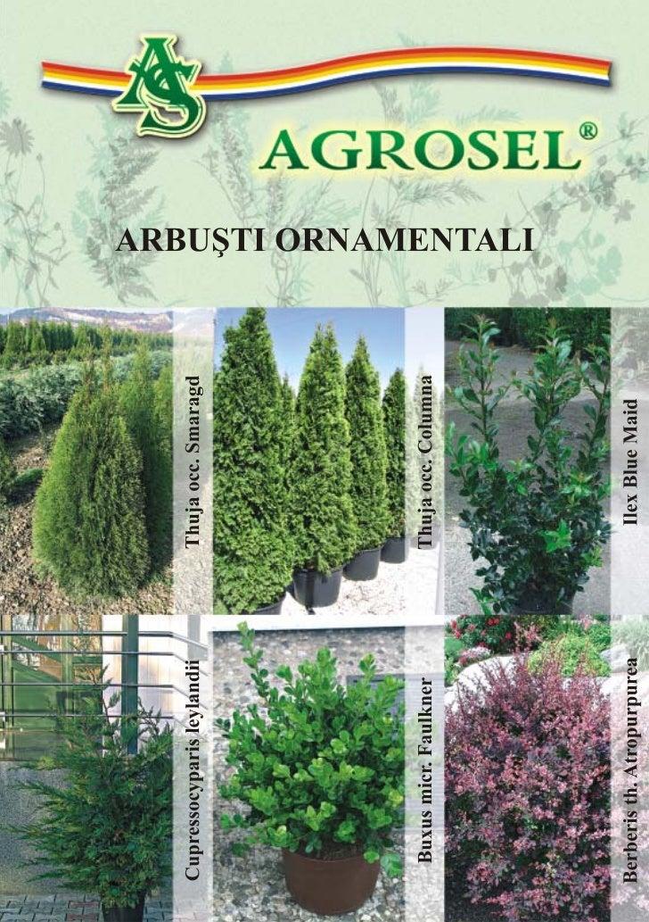 Leaflet arbusti ornamentali 1 for Arbusti ornamentali